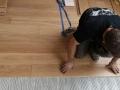 Deski podłogowe dębowe, lakierowane, montaż  w Krakowie
